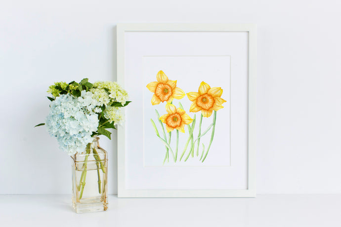 Daffodil - 50 Watercolor Flowers Project