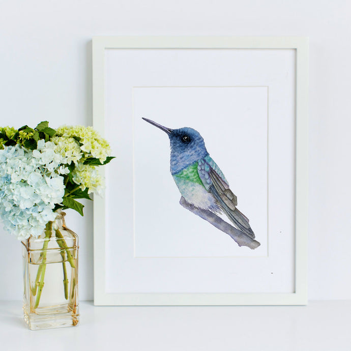 The Watercolor Hummingbird Series