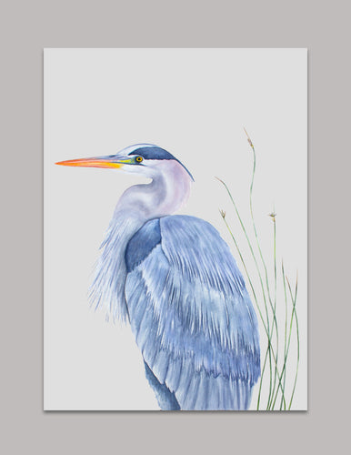 Watercolor Great Blue Heron Art Print