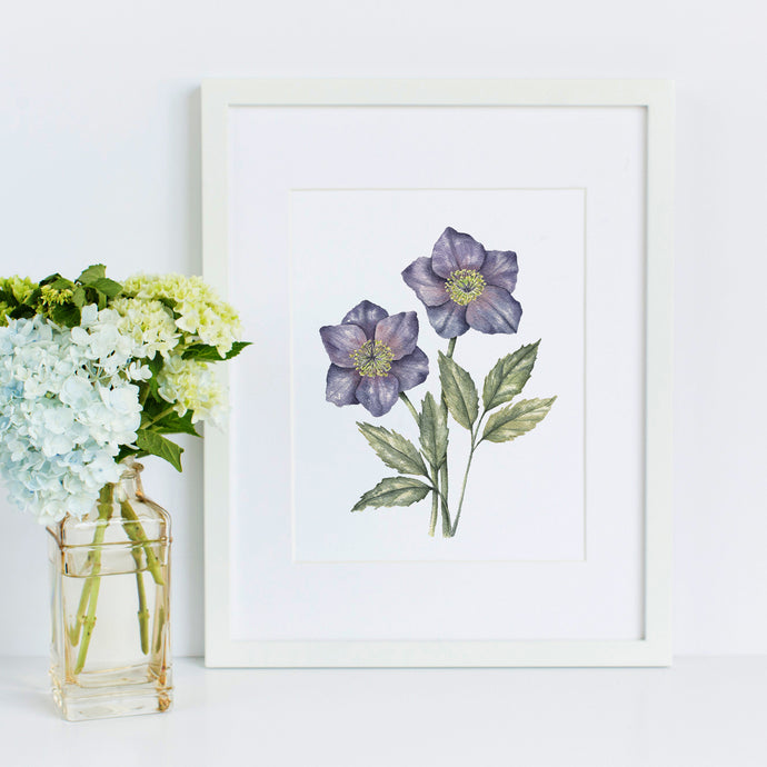 Hellebore | Christmas Rose Original Painting