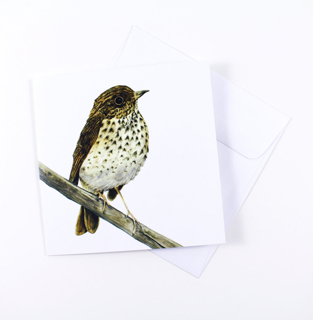 Watercolor Hermit Thrush Bird Card