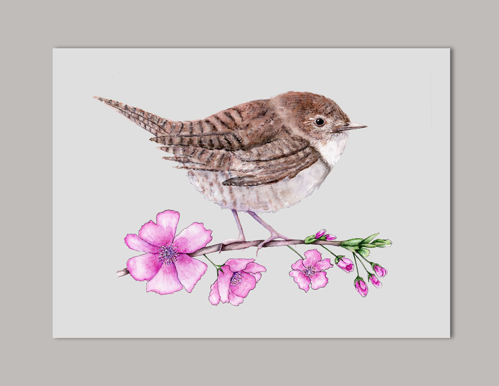 House Wren on Cherry Branch Watercolor Art Print