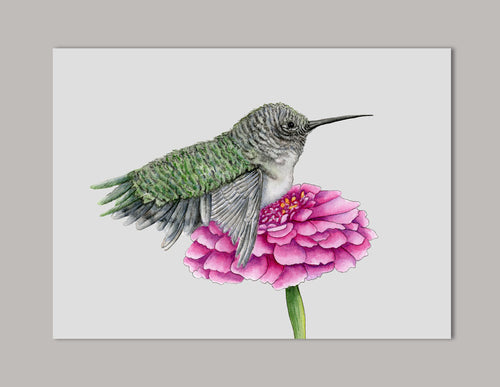 Hummingbird on Gerber Daisy Art Print