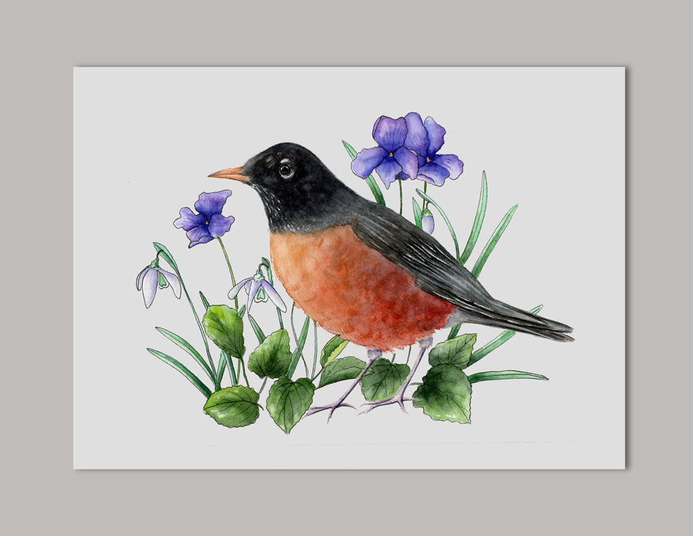 Red-breasted Robin Watercolor Art Print