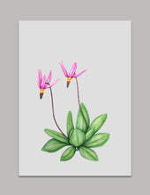 Shooting Star, Dodecatheon pulchellum Original Painting