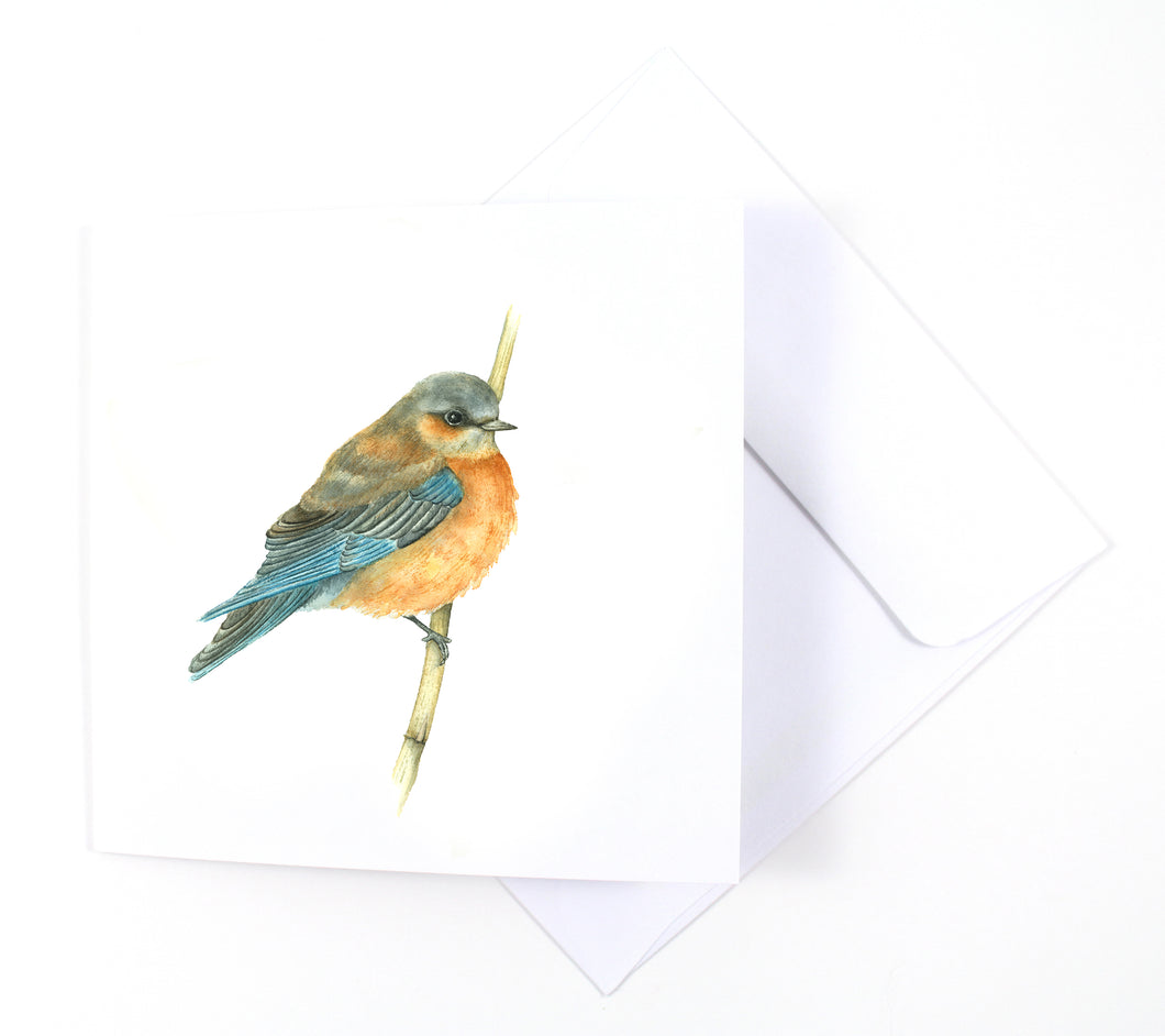 Western Bluebird Watercolor Card