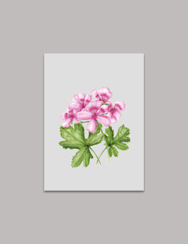 Botanical Rose Geranium Original Painting