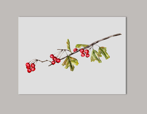 Hawthorn Branch Watercolor Original Painting