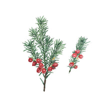 Holiday Yew Tree Watercolor Art Print