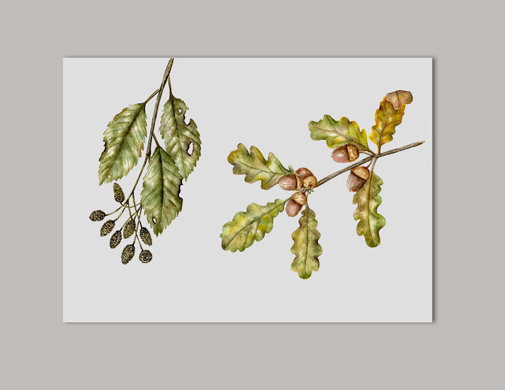 Oak and Alder Watercolor Original Painting