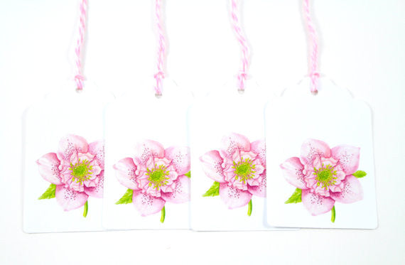 Pink Hellebore Flower Watercolor Gift Tags