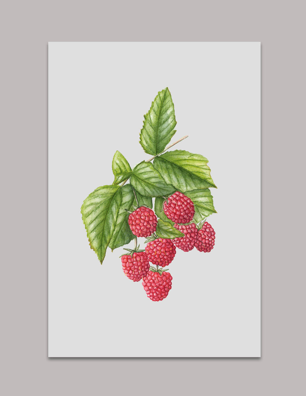 Raspberry Original Painting