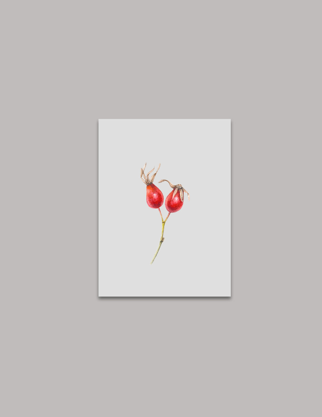 Rose Hips Original Painting
