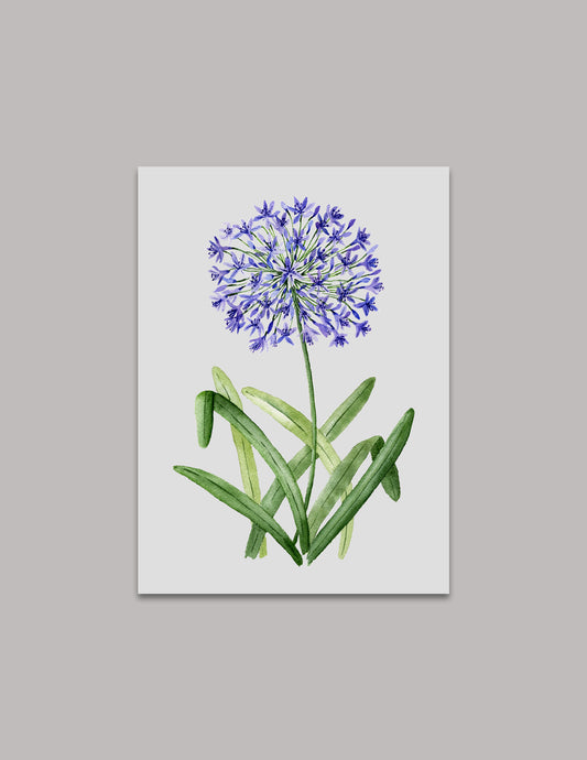 Agapanthus (Lily of the Nile) Original Painting