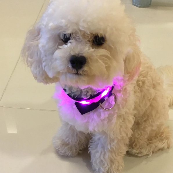 Cool LED Glowing Pet Collars