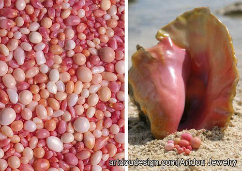 conch pearl of caribbean sea