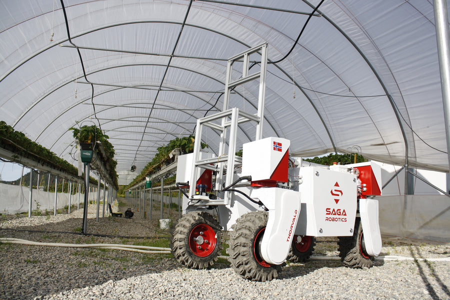 RASberry - Robotics and Automation Systems for berry production