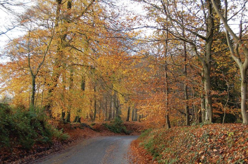 5 of the best autumn walks in Cheshire - with a FREE downloadable walk