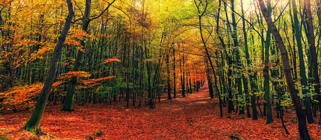 5 of the best autumn walks in the Chilterns – with a FREE downloadable walk