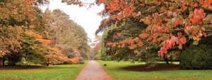 5 of the best autumn walks in Bristol & Bath - with a FREE downloadable walk