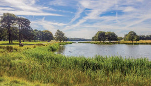 FREE Cheshire Dog Walk: Knutsford & Tatton Park (3.5 miles)