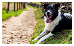 A-Z of Dog Friendly Pubs in Derbyshire & the Peak District