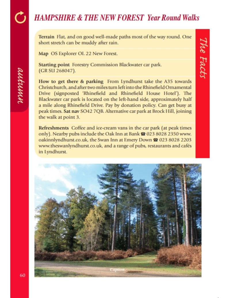 Hampshire & the New Forest Year Round Walks autumn walk