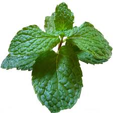 Wenslydale Fresh Mint 30g