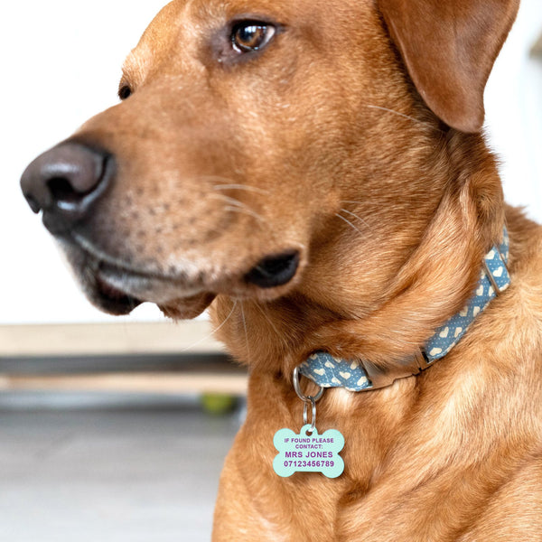 Pastel Pet ID tag for dogs UK