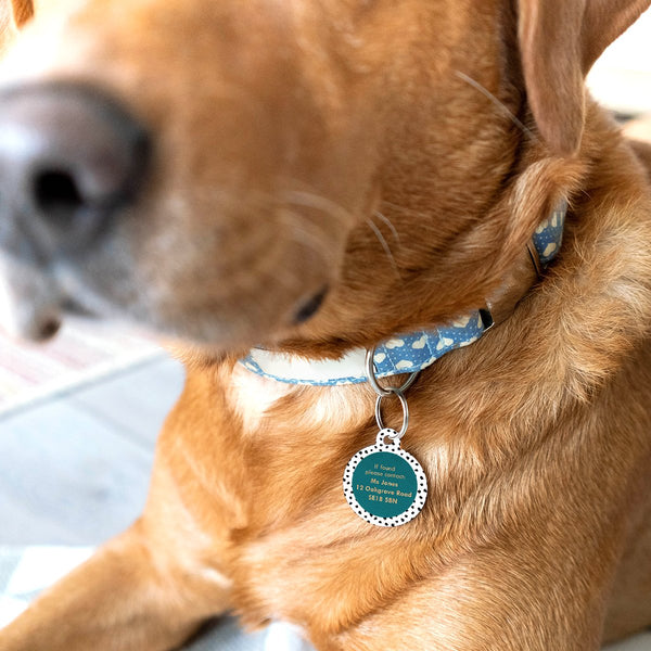 Designer Pet Id Tag for Dogs