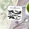 Dinosaurs Of Crystal Palace Chart Coaster