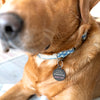 Personalised Special Needs Pet ID Tag