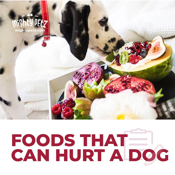 7 Foods You Should Avoid Giving Your Dog