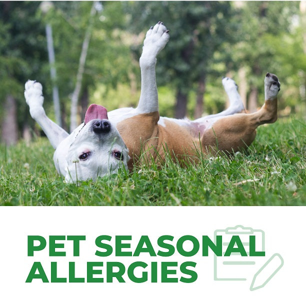 How to Help Pet With Seasonal Allergies?