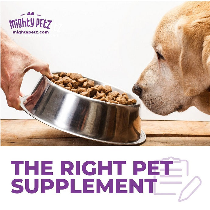 How to Choose the Best Pet Supplement?