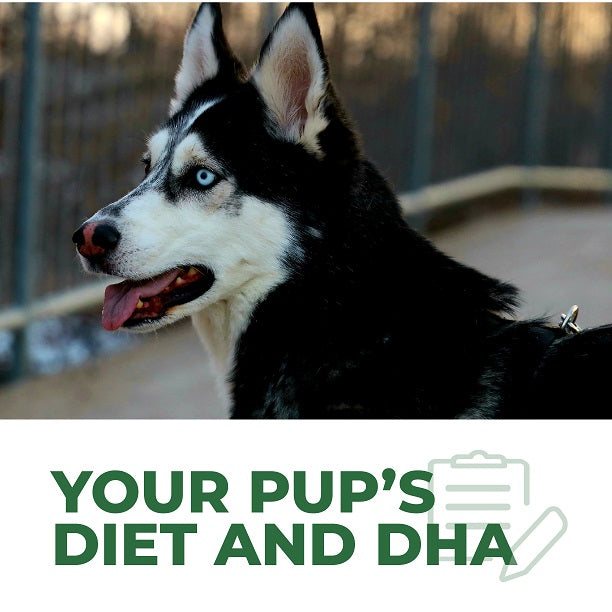 Everything You Need to Know About DHA In Your Pup's Diet!
