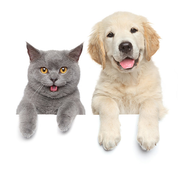Healthy Pet Supplements and Treats