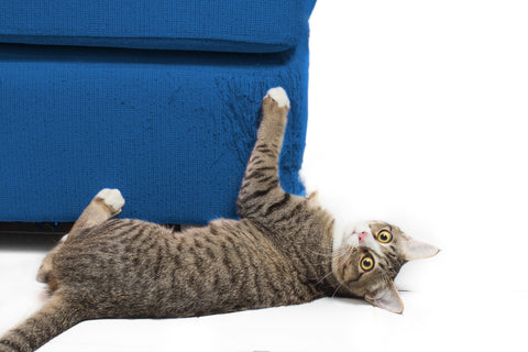 cat scratching blue couch