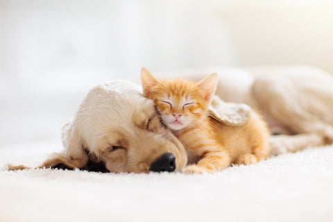 Cat with dog while sleeping