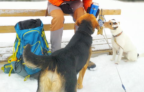 giving treats to dogs
