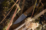 Fitzroy Field Knife D2