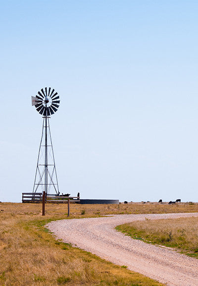 Aermotor Windmill in Field with Cattle