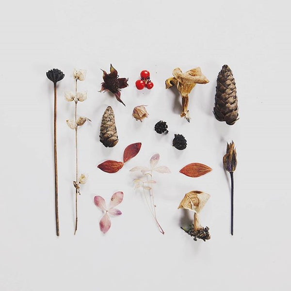 Autumn treasures for 'Simple Nature Finds' by @myrfivel