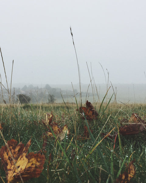 Love misty mornings on the South Downs. There are so many beautiful autumn colours, leaves and mushrooms at the moment.