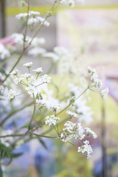 Cow parsley at Jessica Zoob's studio, fine art print giveaway