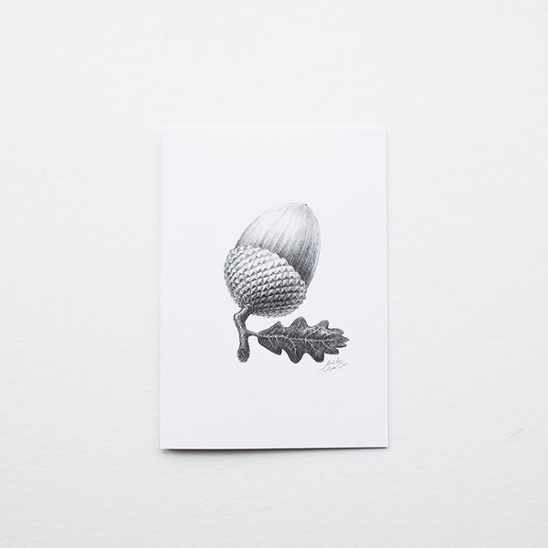 'Acorn' greeting card features one of the original pencil drawings from the 'Technature' range by Malcolm Trollope Davis.