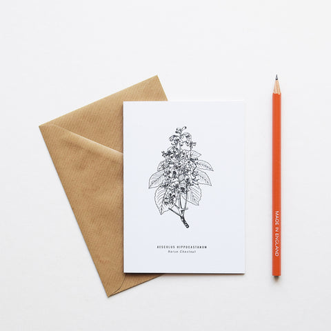 Inspired by Victorian botanical illustrations and vintage apothecary style this beautiful Horse Chestnut drawing is one of a set of eight greeting card designs by Alfie's Studio stationery range. It is printed on a crisp white background and comes with a craft envelope.