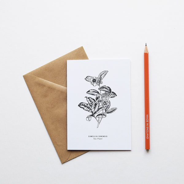 Inspired by Victorian botanical illustrations and vintage apothecary style this beautiful Tea Plant / Camellia Sinensis drawing is one of a set of eight greeting card designs by Alfie's Studio. It is printed on a crisp white background and comes with a craft envelope.