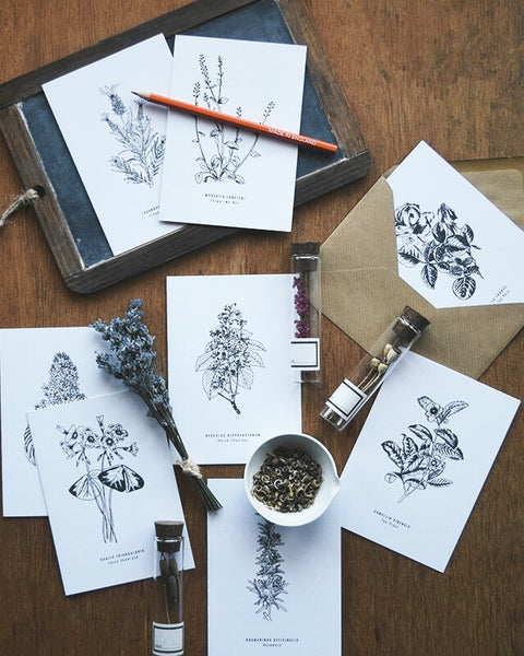 Greeting cards inspired by Victorian botanical illustrations and vintage apothecary style | This beautiful Tea Plant / Camellia Sinensis drawing is one of a set of eight greeting card designs by Alfie's Studio. It is printed on a crisp white background and comes with a craft envelope.