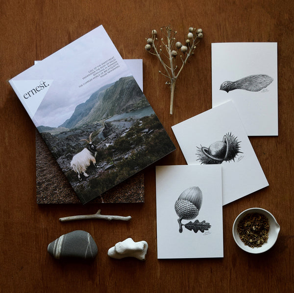 This set of botanical inspired greeting cards features three of the original pencil drawings from the 'Technature' range; 'Acorn', 'Sycamore Seed' and 'Horse Chestnut' by Malcolm Trollope Davis.